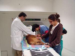 Obrázok pre výrobcu V Lisabone pri CT-skene bežne pracujú aj študenti.